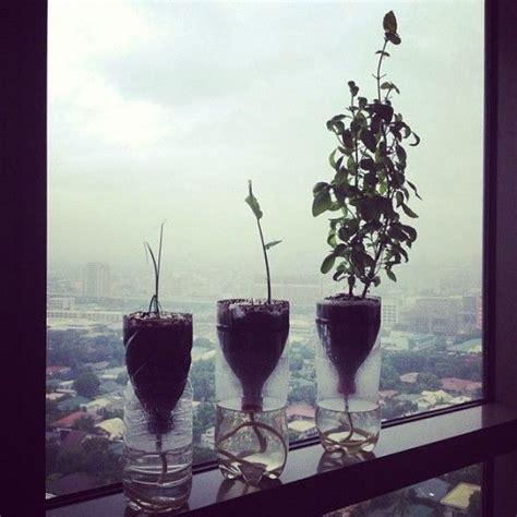 vasi con bottiglie plastica vasi con bottiglie di plastica per il terrazzo arte