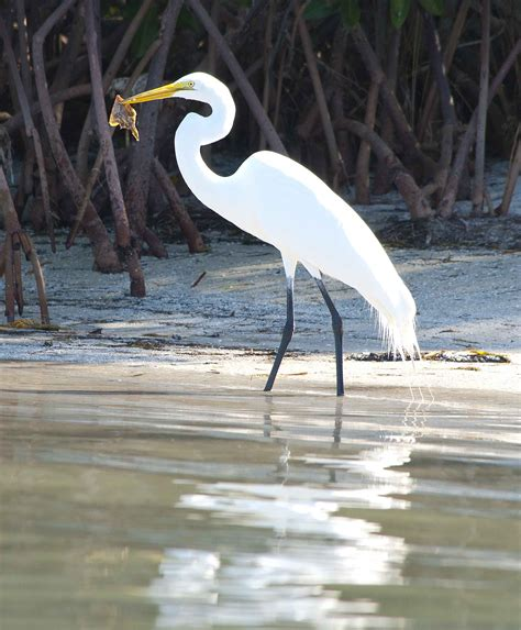 florida birds go fishing wind against current