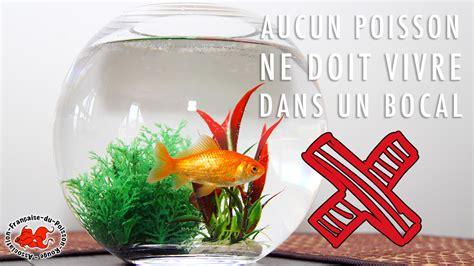aquarium bocal poisson le site du poisson quel poisson dans un bocal