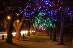 lights christmas free stock photo trees decorated at night with christmas lights 9249