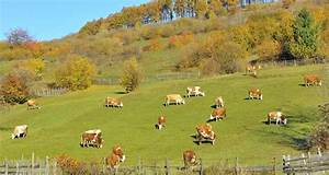 Mixed crop-livestock farming systems: a sustainable way to ...