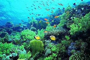 Coral Reef Wallpapers