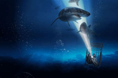 film review sharks suffocation  safety issues