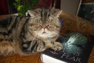 Really Fat Ugly Cats