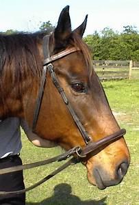 Double bridle vs. regular bridle? - The Horse Forum