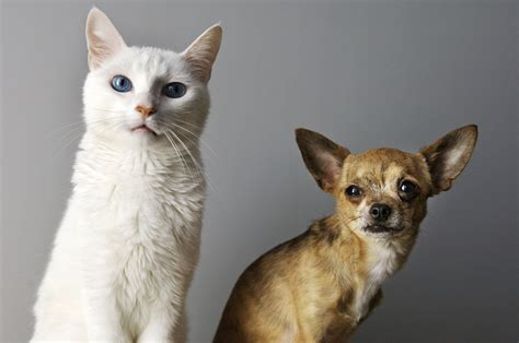 cat dog cats duo owner better dogs than why am jealous person friends cattime owners space reasons photowall im
