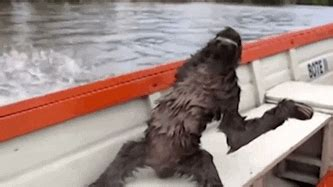 boat chilling gif find share  giphy