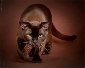brown cat brown cat