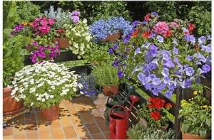 jakie rosliny na balkon poludniowy wybrac rosliny na With katzennetz balkon mit sun garden maspalomas