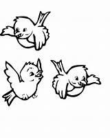Coloring Bird sketch template