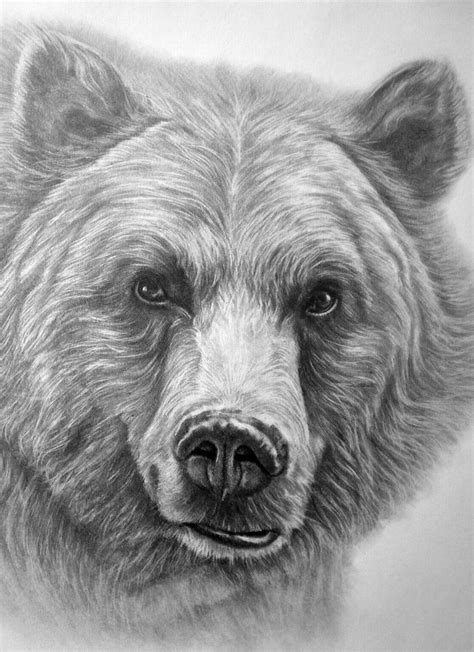 Beautiful Grizzly Bear Drawing! in 2019   Bear drawing, Bear paintings, Grizzly bear drawing