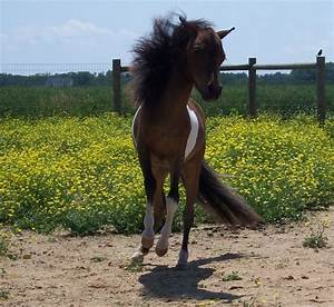 Lovett Farms Miniature Horses