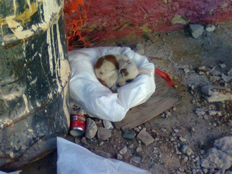 decenas de miles de perros en estado de abandono
