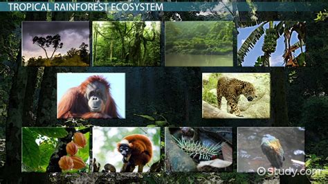 tropical rainforest producers  consumers video
