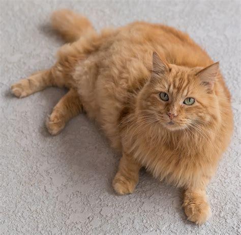 cat name orange cat names 135 best names for ginger kittens