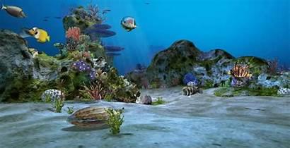 Aquarium Gifs Giphy Tweet