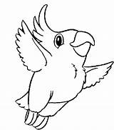 Parrot Coloring Pages Flying Drawing Easy Print Parrots Printable Colornimbus Getcolorings Getdrawings sketch template