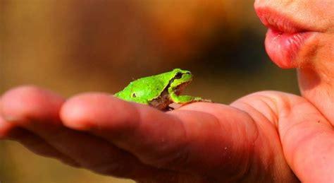 Kröten, Molche & Eidechsen  Amphibien & Reptilien Im