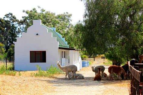 Cottage Cape Town Cottage Time Rent Cape Town Accommodation In