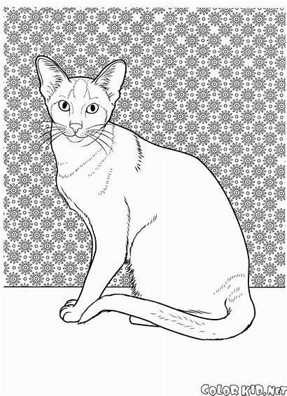 Cat Coloring Colorare Kot Gato Colorear Kolorowanki