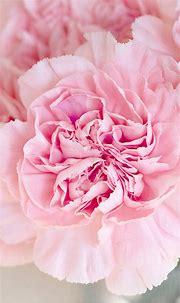 Free HD Pink Flowers Phone Wallpaper...7337
