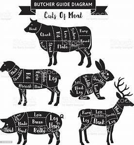 Butcher Guide Cuts Of Meat Diagram Stock Illustration