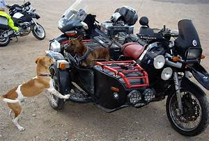 MOTORCYCLE 74: Bmw sidecar dog