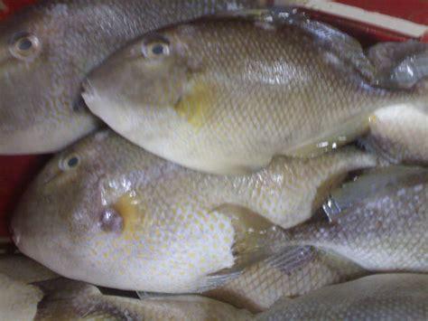 ikan ayam ayam pengganti nasi kinelblog