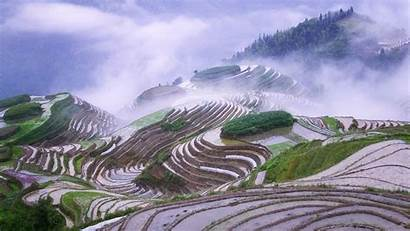 China Wallpapers Chinese Landscape Rice Background Field