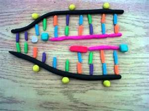 DNA Replication project. - YouTube