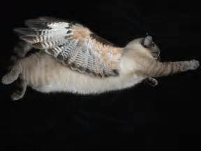 cats with wings cat with wings by unbreakabledolphin on deviantart