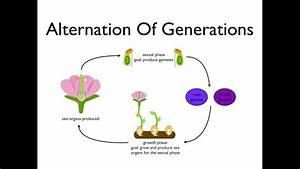 Alternation of Generations (angiosperms) - YouTube