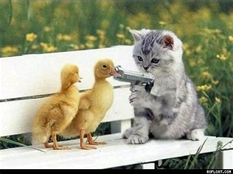 Funny Cats And Duck Babies  Must Watch Youtube