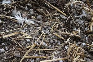 Sufficient for Our Need: Chicken Manure