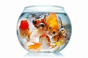 Go Beyond the Fishbowl - Erin Knight