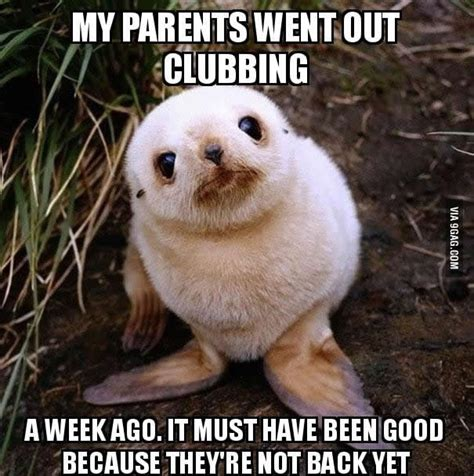 Baby Seal Meme - pics for gt baby seal meme clubbing