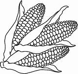 Clipart Corn Coloring Pages Clipartion sketch template