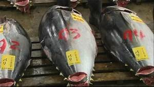 Japan new year tuna sale sets price record - BBC News