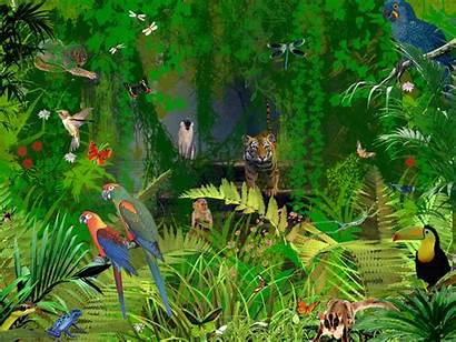 Jungle Animated Baltana Nature Wallpapers Scroll
