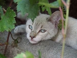 Katze Erbricht Oft : katze erbricht hausmittel gegen erbrechen bei katzen ursachen symptome behandlung ~ Frokenaadalensverden.com Haus und Dekorationen