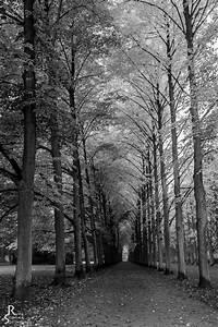 Herbst Schwarz Weiß : geht herbst auch in schwarz wei foto bild jahreszeiten herbst sw es geht auch ohne ~ Orissabook.com Haus und Dekorationen