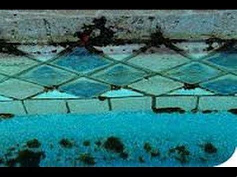 How To Easily Test For Swimming Pool Black Algae Youtube