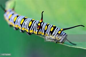 Colorful Caterpillar Stock Photo | Getty Images