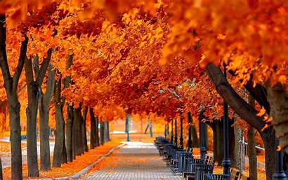Orange Forest Wallpapers Widescreen Baltana Nature