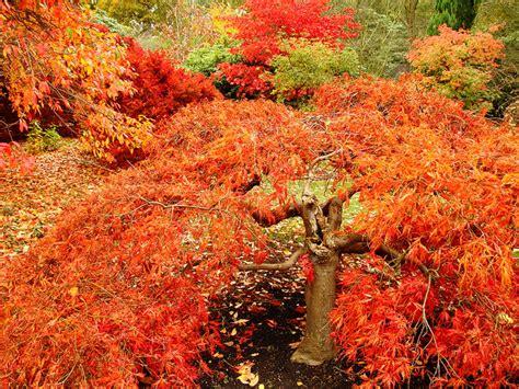 Gartenbauorg  Garten Im Herbst Vorbereitung Auf Den Winter