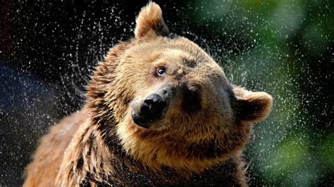 bear market grizzly trump july clinton makes crypto different marketwatch grizzl whoever wins matter coming choice cnbc