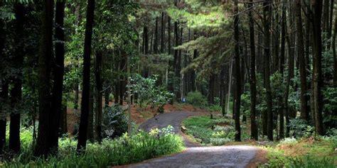 wisata kekinian  hutan pinus gunung pancar sentul