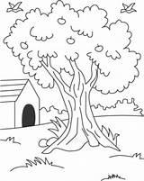 Coloring Arbol Tree Primavera Colorear Baum Dibujo Patio Casa Disegni Trasero Dibujar Nature Ausmalbilder Bing Casas Malvorlagen Konabeun Relacionados Kinder sketch template