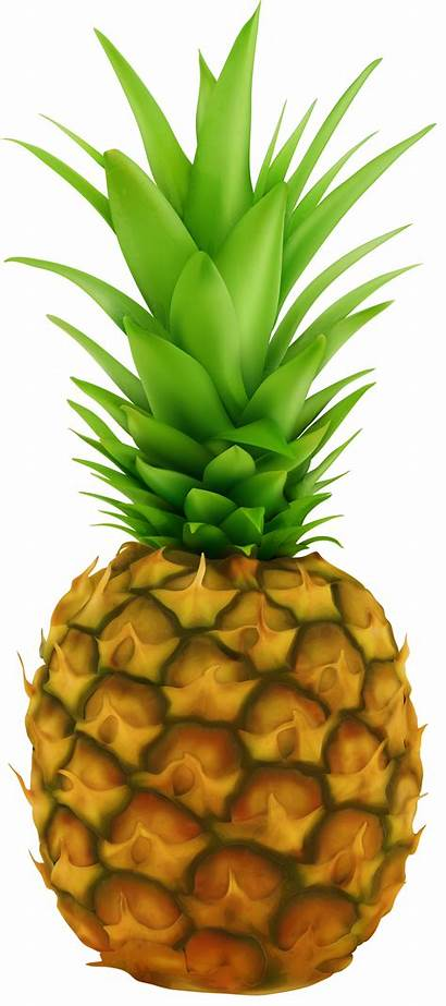 Pineapple Transparent Clipart Clip Fruit Yopriceville Clips