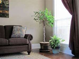 Living Room : Beautiful Plant Decoration In Living Room